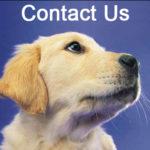 Contact Us Hidden Fence